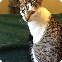Adopt A Pet :: Diego - Edmonton, AB