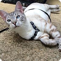 Adopt A Pet :: LeeLee - McDonough, GA