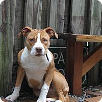 Adopt A Pet :: Barfield - Snellville, GA