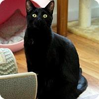 Adopt A Pet :: James - Gaithersburg, MD