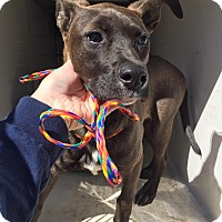 Adopt A Pet :: Todd - Humble, TX