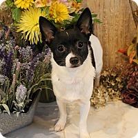 Adopt A Pet :: Bonnie - Frankfort, IL