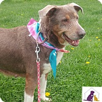 Adopt A Pet :: Socks - Eighty Four, PA