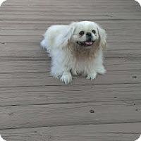 Adopt A Pet :: Jeffery - Richmond, VA