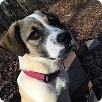 Adopt A Pet :: Jake - Greensboro, GA
