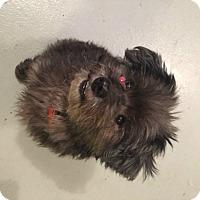 Adopt A Pet :: Bennett - Muskegon, MI