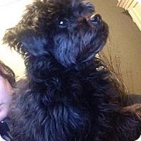 Adopt A Pet :: Shelly - Hamilton, ON