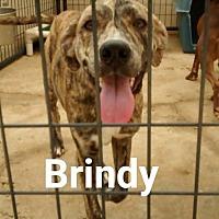 Adopt A Pet :: Brindy - Marianna, FL