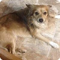 Adopt A Pet :: Felipe - Hedgesville, WV