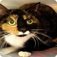 Adopt A Pet :: SASSY - Atlanta, GA