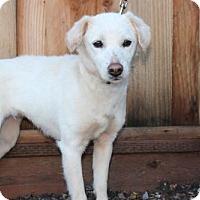 Adopt A Pet :: Penelope - Palo Alto, CA