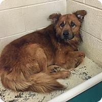 Adopt A Pet :: Elliot - Greensburg, PA