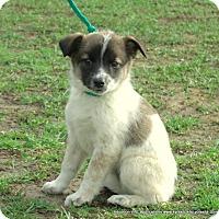 Adopt A Pet :: ELLIE/APP REVIEW~HOLD - parissipany, NJ