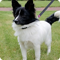 Adopt A Pet :: Timothy - Hopkinton, MA