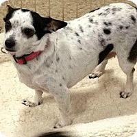 Adopt A Pet :: Lola - Mesa, AZ