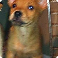 Adopt A Pet :: Castiel - Nashua, NH