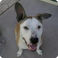Adopt A Pet :: Buddy,happy boy - Sacramento, CA