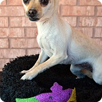 Adopt A Pet :: Ava - Bridgeton, MO