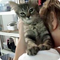 Adopt A Pet :: Birney - Lawrenceville, GA