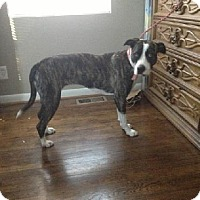 Adopt A Pet :: Deliah (courtesy listing) - Brentwood, TN