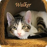 Adopt A Pet :: Walker - Winter Haven, FL
