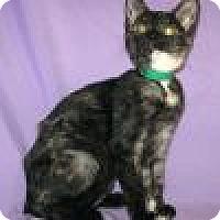 Adopt A Pet :: PheePhee - Powell, OH