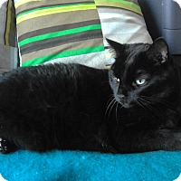 Adopt A Pet :: Scarlet - Toronto, ON