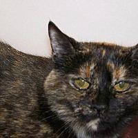 Adopt A Pet :: Esperanza - Westville, IN
