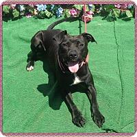 Adopt A Pet :: ANGIE - Marietta, GA