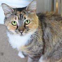 Adopt A Pet :: Irina  170184 - Atlanta, GA