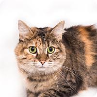 Adopt A Pet :: Jackue - New Castle, PA