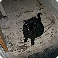 Adopt A Pet :: Willis - Scottsdale, AZ