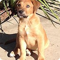 Adopt A Pet :: GARTH - Torrance, CA