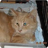 Adopt A Pet :: Colin - Riverside, RI