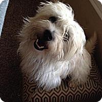 Adopt A Pet :: Felix - Norman, OK
