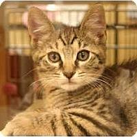 Adopt A Pet :: Josh - Jenkintown, PA