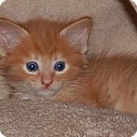 Adopt A Pet :: Moses - Reston, VA