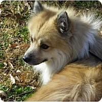 Adopt A Pet :: ELY - Hesperus, CO