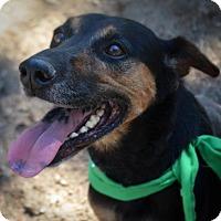 Adopt A Pet :: Katie - Burleson, TX