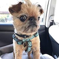 Adopt A Pet :: Bob in Los Angeles, CA - Los Angeles, CA