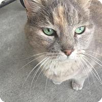 Adopt A Pet :: Harper - Lafayette, LA