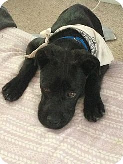 Boxer Mix Dog for adoption in Jersey City, New Jersey - Jakob Dylan