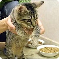 Adopt A Pet :: Katie - Naples, FL