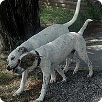 Adopt A Pet :: Jacob and/or Neelix - Copperas Cove, TX