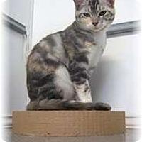 Adopt A Pet :: Brandy - Shelton, WA