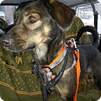 Adopt A Pet :: Gypsy - Bardonia, NY