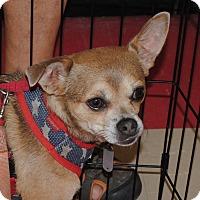 Adopt A Pet :: Bubba Gump - Shelter Island, NY