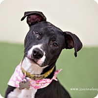 Adopt A Pet :: Zoe - in Maine - kennebunkport, ME