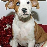 Adopt A Pet :: Leo - Erwin, TN