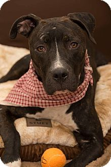 Terrier (Unknown Type, Medium) Mix Dog for adoption in Flint, Michigan - Levi - Adopted